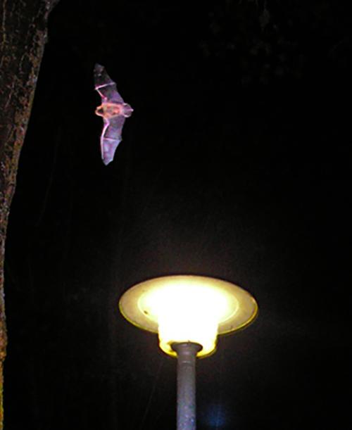 La biodiversité préservée par un éclairage mieux adapté
