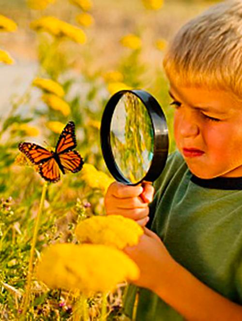 Biomimetisme - Les solutions pleine de sagesse